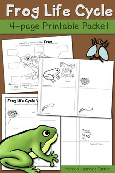 Frog Life Cycle Worksheets - includes mini-book, vocabulary page, and label the frog