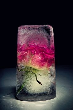 So Pretty 50 Ice In Cubes Inspiration For Your Wedding Drink - Beauty of Wedding Still Life Photography, Macro Photography, Belle Image Nature, Nature Verte, Cristal Art, Frozen In Time, Belle Photo, Installation Art, Flower Art