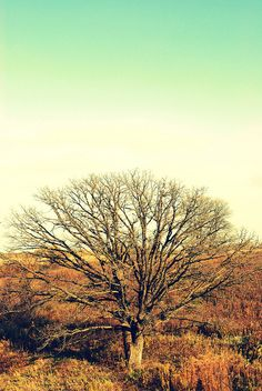 This is a picture of a tree.