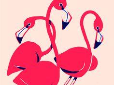 Flamingos by Hayden Davis