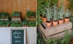 [tps_header]Whether you're planning a botanical wedding or simple want to add an organic touch to your wedding décor, incorporating potted plants isa great idea. Depending on their size, type of flowers and greenery ...