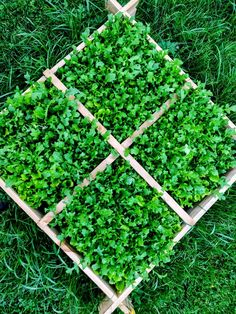 Super praktisch - kleines Hochbeet mit Pflücksalat zum nachen und ernten. #gartenzeit #wildflowers #gemüsegarten #selbstversorger