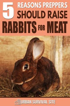 When people decide to raise animals, they usually get chickens, but there are many reasons preppers should raise rabbits for meat. Meat Rabbits Breeds, Raising Rabbits For Meat, Rabbit Breeds, Urban Survival, Survival Food, Wilderness Survival, Survival Skills, Rabbit Dishes, Seven Pounds