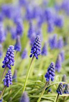 ¿Hay Contraindicaciones de las Flores de Bach?