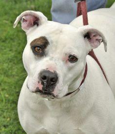 Franklin County Dog Shelter   Ruthie. 10/10/16