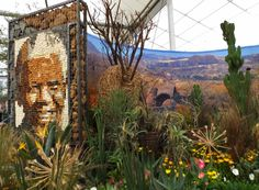 Portrait of #Nelson #Mandela in the South African National Biodiversity Institute - #Kirstenbosch at #Chelsea #flower #show 2014