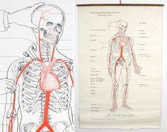 Anatomy chart vintage