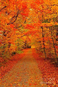 Autumn Escape Photograph by Terri Gostola - Autumn Escape Fine Art Prints and Posters for Sale