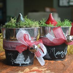 Christmas Sprouting Pots | Capper's Farmer