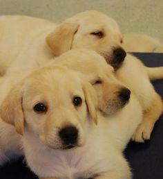 What's cuter than a puppy pile?!