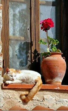 The cat and the flower This photo was taken in a monastery at Meteora in Thessaly, Central Greece felin I Love Cats, Crazy Cats, Cute Cats, Funny Cats, Adorable Dogs, Animals And Pets, Cute Animals, Nature Animals, Wild Animals