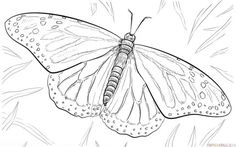 How to draw a monarch butterfly step by step. Drawing tutorials for kids and beginners.