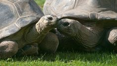 Turtle 'marriage' ends after 115 years: After more than a century together, two tortoises at an Austrian zoo have apparently called it quits — and their divorce is anything but amicable.