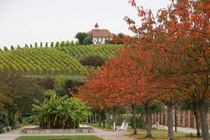 Bad Dürkheim, Kurpark, Weinberge und Michaelskapelle (Spa Park, vineyards and St. Michael's Chapel) by HEN-Magonza, via Flickr