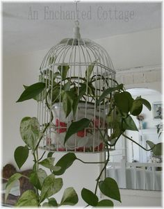 bird cage planter So I can actually have house plants without my cats., The bird cage is both a house for your birds and an ornamental tool. You can select anything you need one of the bird cage versions and get far more particular images. Hanging Bird Cage, Diy Hanging, Hanging Plants, Indoor Garden, Indoor Plants, Birdcage Planter, Birdcage Decor, Antique Bird Cages, Diy Planters
