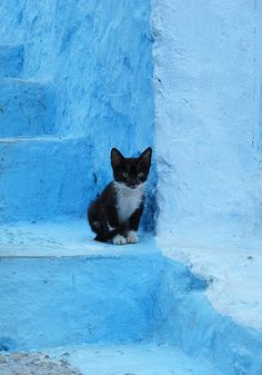 Chefchaouen. Little kitten on blue steps by Sallyrango, via Flickr