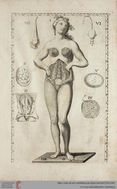 Anatomical engraving by Gaetano Petrioli from Le otto tavole anatomiche, published in Rome, 1750