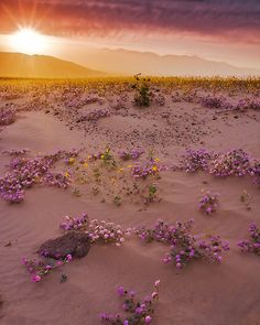 It's the most wonderful time of the year: April in Death Valley