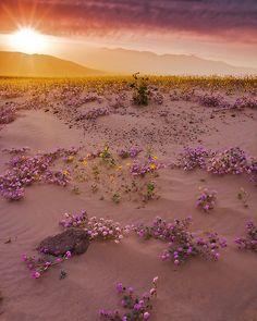 April in Death Valley