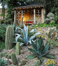 The Exotic Garden Blog | The Exotic Garden by Will Giles in Norfolk - Subtropical Plants in a temperate climate