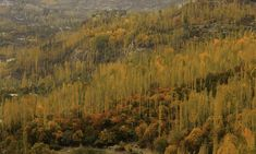 Autumn in Hunza valley.