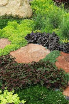 Groundcover for walkway.