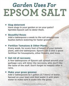 Garden Uses For Epsom Salt