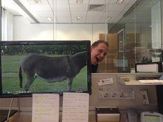 Office Safari 10 #OfficeSafari #FunnyStatus
