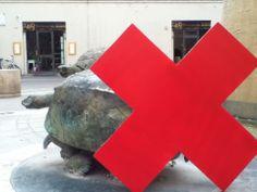 Le famose tartarughe #Italy #foligno