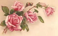 FREE vintage roses via  http://www.vintagepaperpixels.com/2012/09/vintage-pink-roses.html: