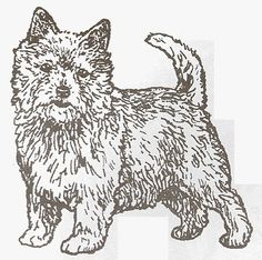 "Dog Rubber Stamp - Norwich Terrier-1E (Size: 2"" Wide X 2"" Tall) by DogStampsPlus.com, http://www.amazon.com/dp/B000M0NL68/ref=cm_sw_r_pi_dp_JOULrb1NR6DGR"