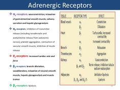autonomic nervous system receptors alpha beta - Google Search