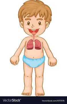 Respiratory system in human boy vector image on VectorStock Senses Preschool, Free Preschool, Preschool Worksheets, Classroom Projects, Respiratory System, Body Systems, Science For Kids, Toddler Activities, Human Body