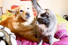 Cats and dogs, living together - aw!