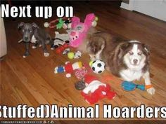 Dogs hoarding stuffed animals