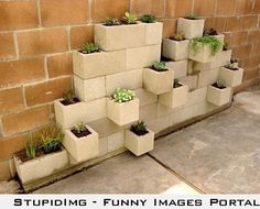Cinder block veggie patch