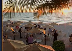 The Turtle Club, Naples, FL sunset drinks followed by great dinner! Walk on the beach from the Ritz-Carlton.