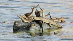 Funny pictures about 25 Of The Best Parenting Moments In The Animal Kingdom. Oh, and cool pics about 25 Of The Best Parenting Moments In The Animal Kingdom. Also, 25 Of The Best Parenting Moments In The Animal Kingdom photos. Wild Life, Reptiles And Amphibians, Mammals, Animal Kingdom, Baby Animals, Cute Animals, Wild Animals, Photo Animaliere, Concours Photo