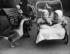 benbasso:    liquidnight:    A goose waits hopefully as twins share a biscuit, United Kingdom, March 1953  Photographer unknown  [via the BBC News Archive]