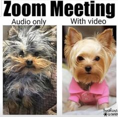 25 Hilarious Zoom Memes That Will Make You Laugh When You Are Working From Home – eSnackable Crazy Funny Memes, Funny Relatable Memes, Funny Jokes, Hilarious Sayings, Funny Pix, Crazy Humor, Jw Funny, Funny Stuff, Funny Selfie