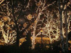 Central Park Christmas design serendipity White Lights Big City