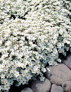 Selection of garden set less than 350 USD - HomeDBS Greenhouse Gardening, Container Gardening, Terrace Garden, Garden Plants, Drought Resistant Plants, Indoor Flowers, Annual Plants, White Gardens, Garden Cottage