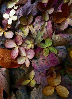 Colourfull leaves