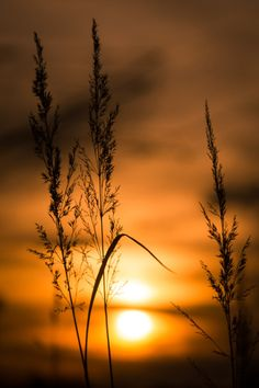 Language of Pictures – Fotografie Summer Nature Photography, Sunset Photography, Landscape Photography, Beautiful Nature Wallpaper, Beautiful Sunset, Beautiful Landscapes, Sunset Wallpaper, Wallpaper Backgrounds, Nature Pictures