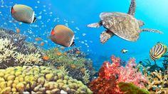 Reef #MarRosso
