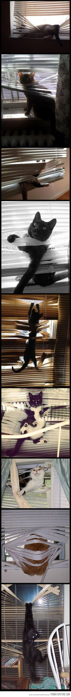 Cats vs. Blinds…I actually have a pic of my cat like this! Haa!