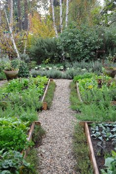 raised beds with gravel paths