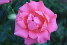 Beautiful Flower Found Around The Estate #therothestate #flower #pretty #nevadacityweddings