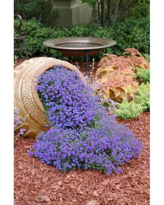 AUBRIETA ROYAL VIOLET, Rock Cress / Perennial / Deer Resistant / Ground Cover / Fragrant Flower Seeds Tried this Garden Design suggestion? We love the simplicity of this ref 5300371286 pin. Give it a go today! Garden Yard Ideas, Easy Garden, Garden Projects, Garden Pots, Garden Cottage, Backyard Ideas, Porch Ideas, Backyard Patio, Backyard Shade