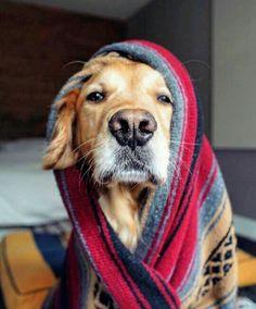 Tá frio aí? Aqui tá uma delícia! ❄⛄